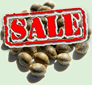 http://cannabis-seeds.bitbucket.io/images02/where+to+buy+marijuana+seed_4589.jpg