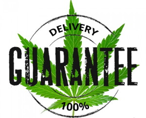 http://cannabis-seeds.bitbucket.io/images03/cannabis+seeds+for+sale+usa_2752.png
